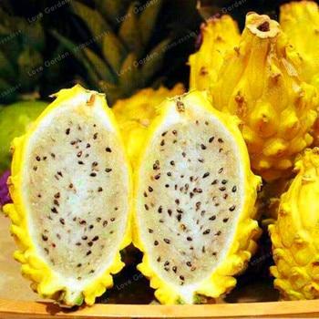 100PCS Rare Yellow Pitaya Fruit Trees Bonsai Perennial Plants Non-gmo Hylocereus Dragon Fruit Home Garden