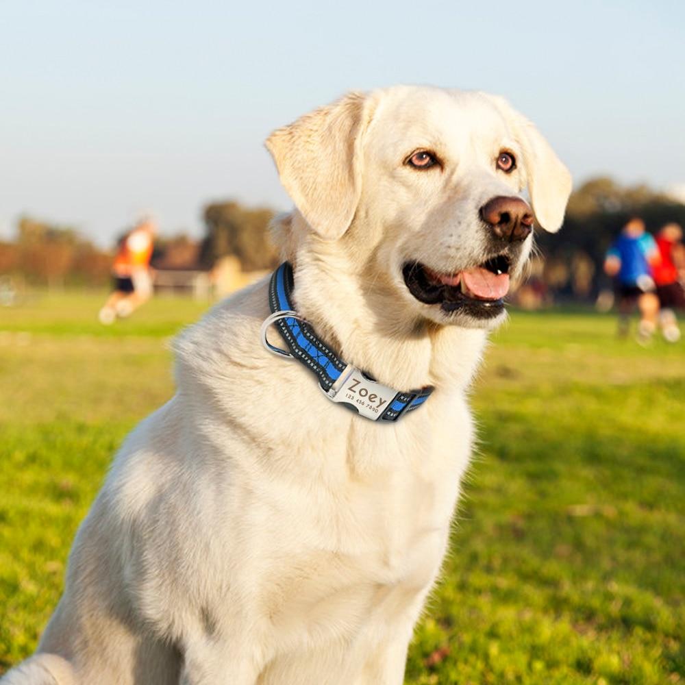 HTB1QcX2bcfrK1Rjy0Fmq6xhEXXaz - Halsband hond met naam en telefoonnummer reflecterend