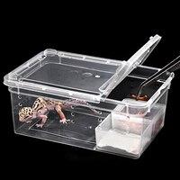 Petforu Reptiel Plastic Voerbox Hagedis Spider Voeden Uitkomen Container-L