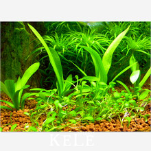 Time-Limit!!aquarium grass seeds (mix) water aquatic plant seeds (15 kinds) home hydroponics plant seeds – 100 pcs/Pack,#D4C74Z
