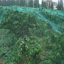 Bird netting for garden online shopping the world largest bird