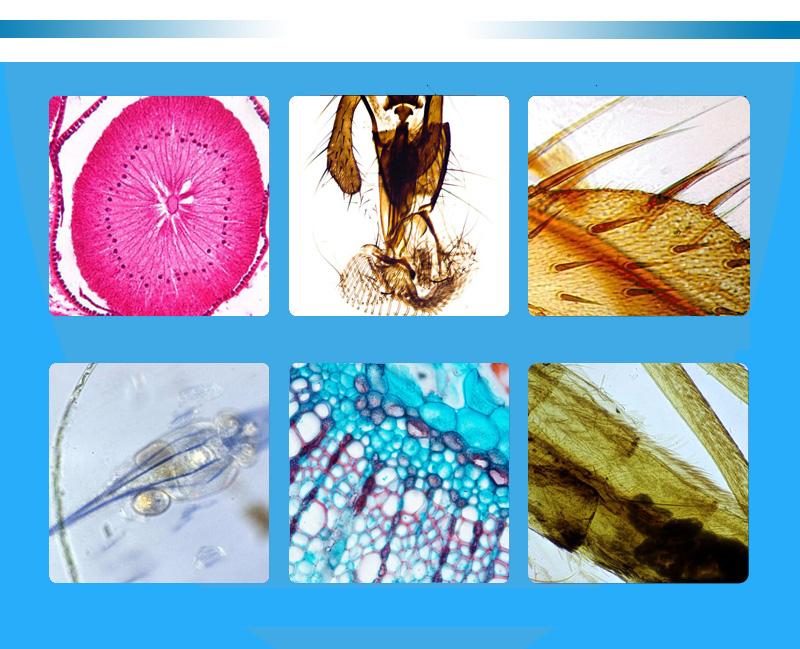 생물 현미경 (9)