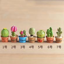 Buy Miniature Cactus Terrarium And Get Free Shipping On Aliexpress Com