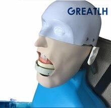 цены Best Dental manikins Phantom Head for dentistry and dental technology Sennior manikins Phantom Head with Torso