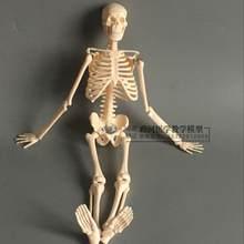 45 cm esqueleto modelo artístico Do Esqueleto do corpo humano modelo