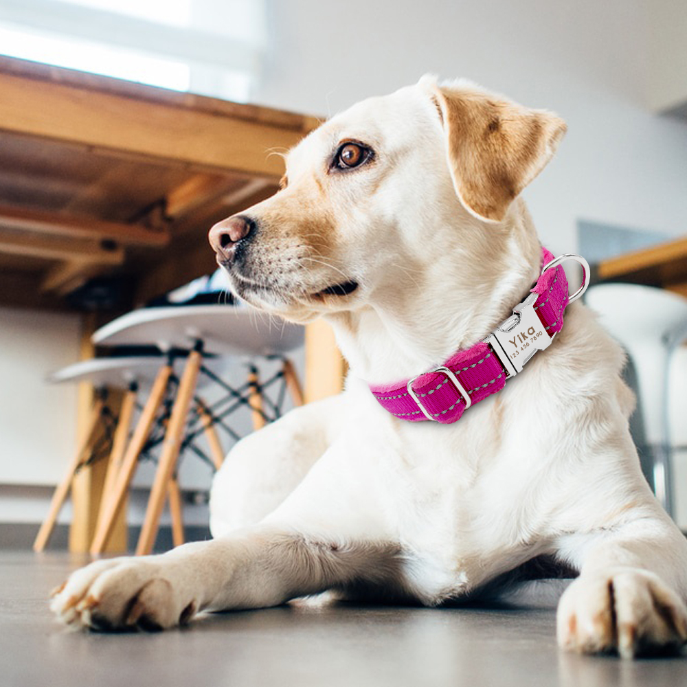 HTB1Qh9AKf5TBuNjSspcq6znGFXax - Halsband hond met naam en telefoonnummer nylon gewatteerd