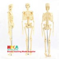 45CM Human skeleton model Decorative gifts Anatomical model Medical Teaching Model Manikin