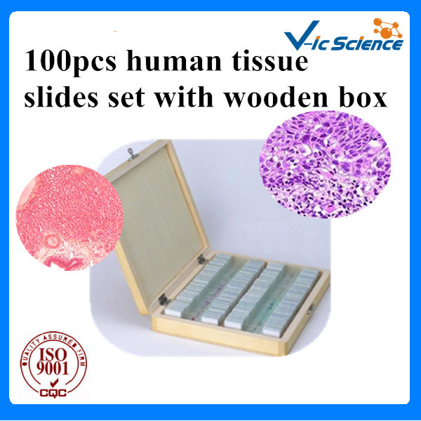 100pcs human tissue slides set with wooden box