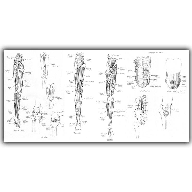 u24eahuman science diagram of  u15d7 human human body muscles image kxso  u221e medical medical knowledge silk