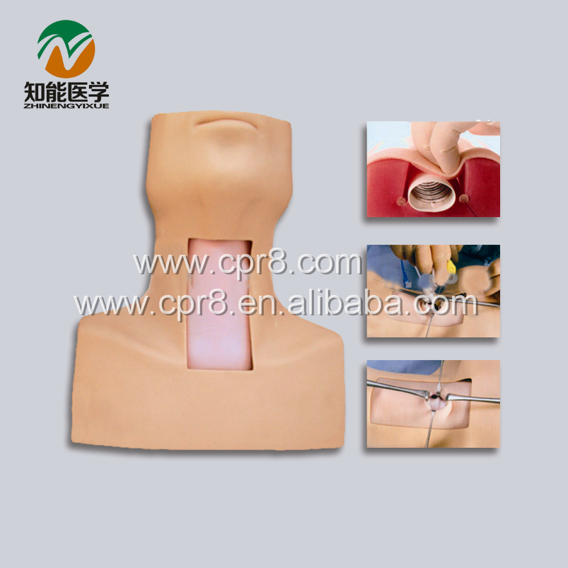 BIX-J58 Senior Weasand Incision Intubation Training Model MQ127 iso economic newborn baby intubation training model intubation trainer