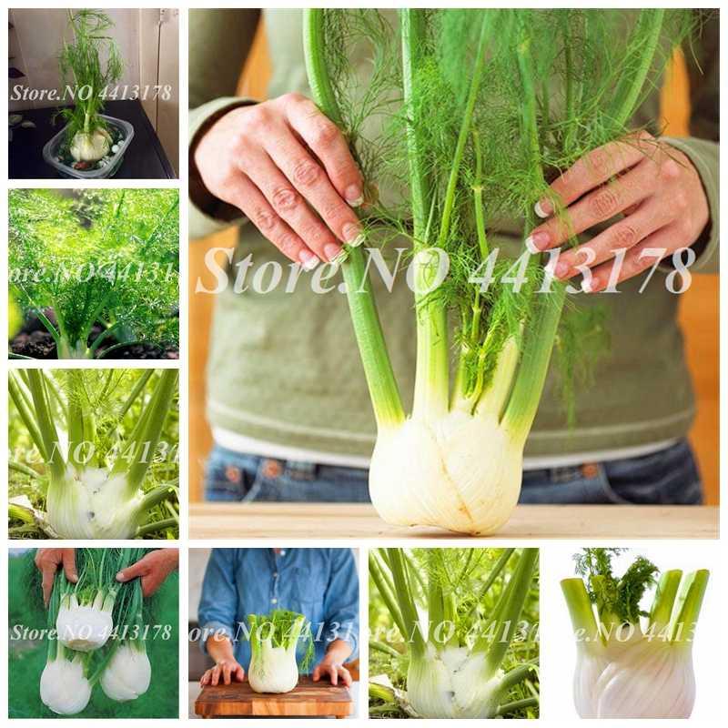 100pcs/ bag Bonsai Fennel Perennial Herb Plant Fresh & Green Organic Outdoor Potted Vegetable DIY Home Garden Planting Easy Grow