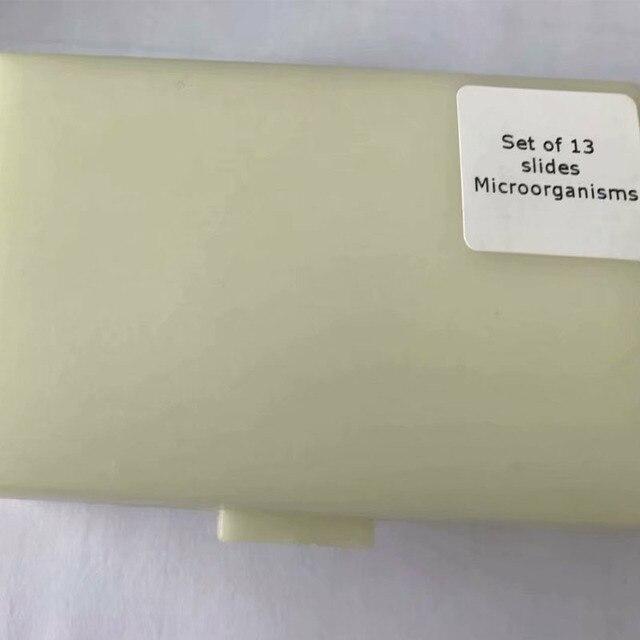 13 個微生物顕微鏡微生物学調製されたスライド