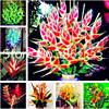 200 Pcs Rare Color Succulent Heliconia plants DIY Home Garden Potted or Yard Flower bonsai Easy to Grow