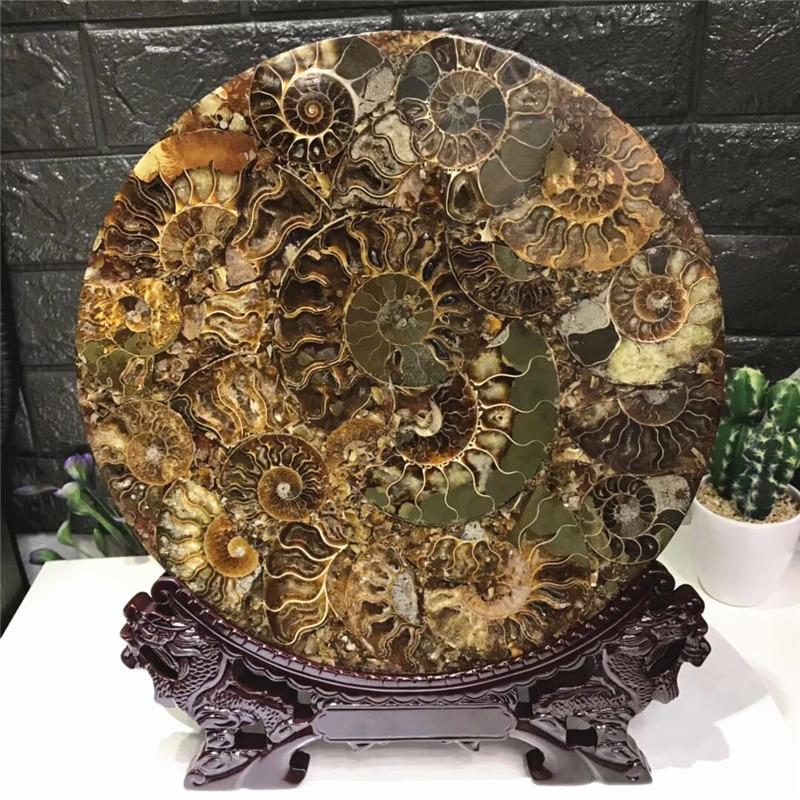 natural stone snail slice/ammonite fossil specimens good luck money wealth disc