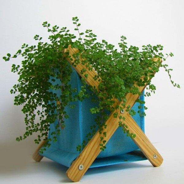 Бесплатная доставка скала семян трав восхождение свежий зеленый традиционный натуральные растительные, Бонсай Трава семян жемчуг, около 100...