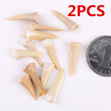 2PCS Shark Tooth Fossil Natural Marine Biology Science Teaching Specimen Diy Material Gift Collection Ornament