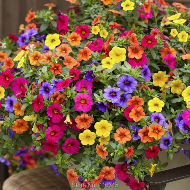 200seedspack Heirloom Hanging Petunia Mixed Seeds Color Waves