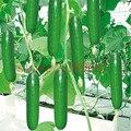 100 pcs grande pepino sementes raras sementes delicioso pepino NO-GMO plantio de frutas e vegetais sementes para jardim de casa