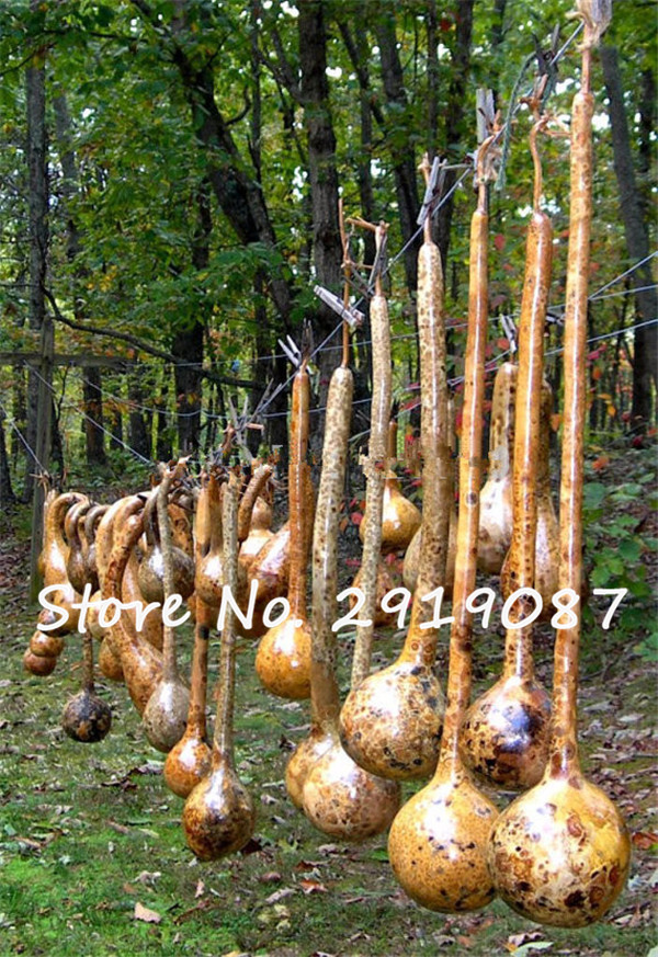 New!10/bag Dipper Gourd Seeds,12 long necks and bulbs with a diameter of 5-7