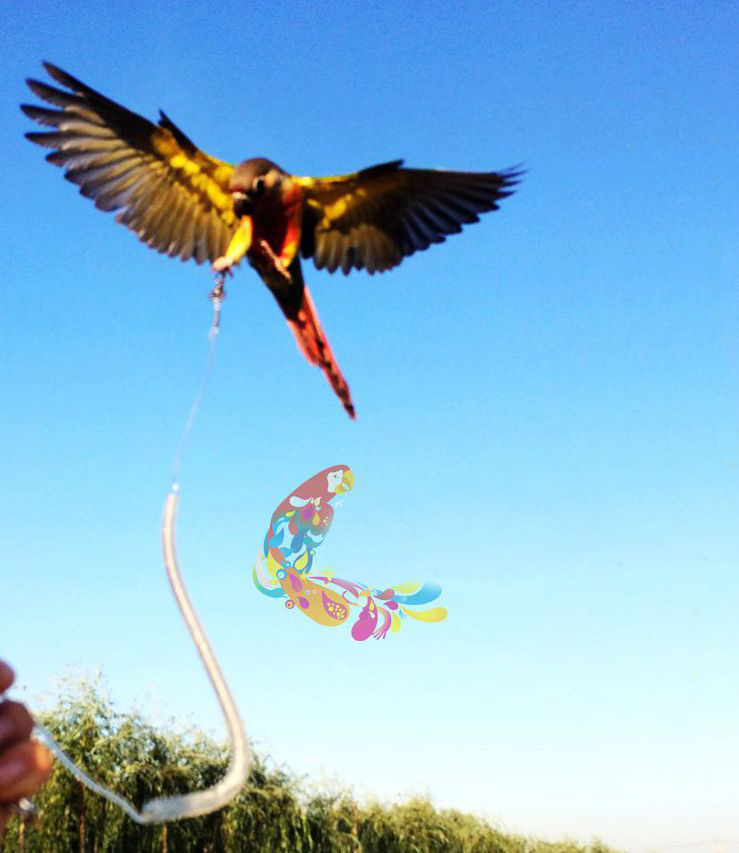 New High Quality Flight Bird Training Rope Long Flying