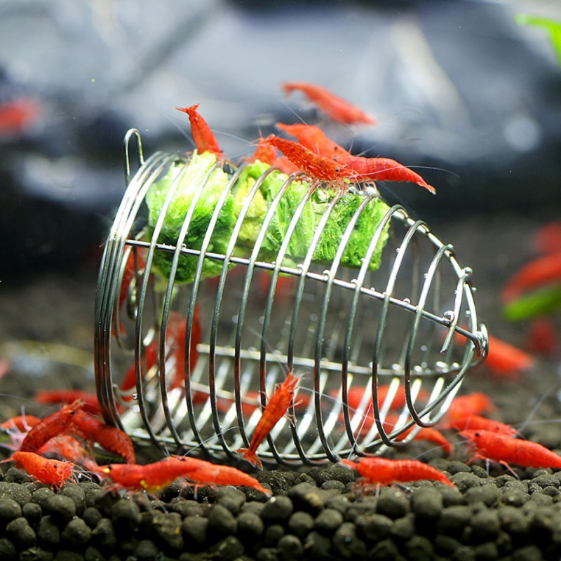 Aquarium Crystal Shrimp Small Bait Cage Feeder Dry Spinach Feeding Stainless Steel Cage Basket Ornamental Shrimp Feeding Tool