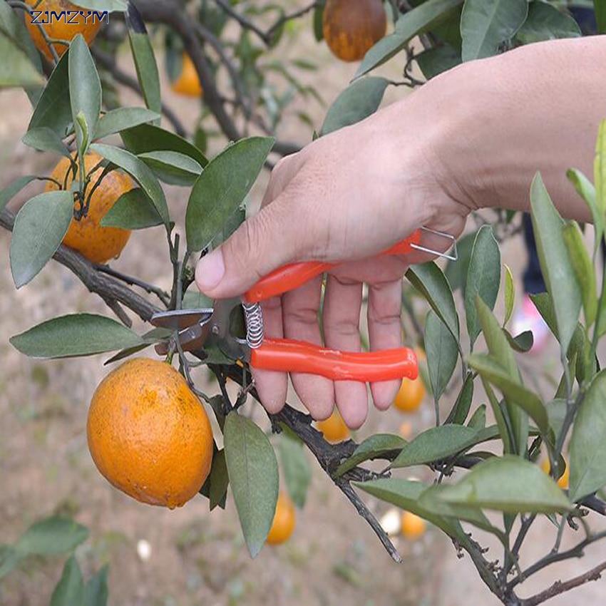 High Quality Stainless Steel Orange Scissors Small Fruit Tree Pruning Shear Fruit Scissors For Gardening Fruit Experts