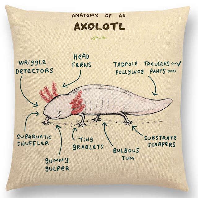 Anatomy Of Animal Axolotl Cushion Cover Flamingo Cockatiel Pug