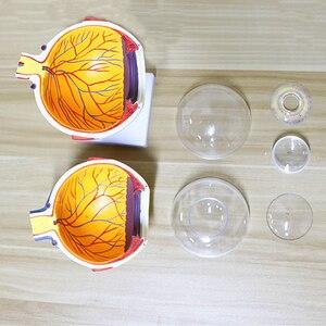 Image 3 - 6 lần Con Người Mắt Mô Hình Giải Phẫu TAI MŨI HỌNG Nhãn Khoa Nhãn Cầu cơ cấu nội bộ Giác Mạc iris ống kính thủy tinh
