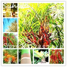 40seeds/bag Organic Sweet Delicious Red Date palm tree seeds Date Palm Phoenix Dactylifera Seeds Diy Home Garden Plants Grow(China)