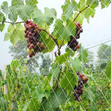 High Quality Casting Net/Clapnet/for capature birds protect your farm and orchard.