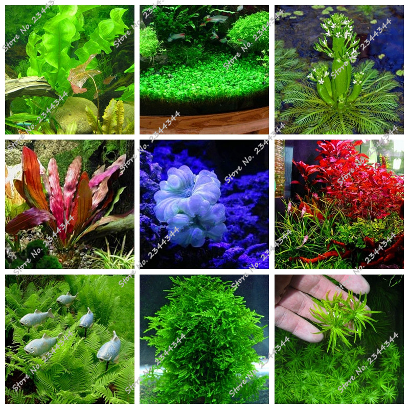 how to grow aquarium grass from seeds