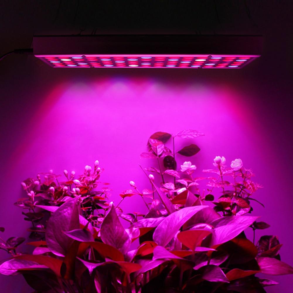 Hugehentaicumshot Vente Ywxlight Plantes Poussent Led