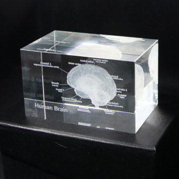 3D Human Anatomical Model Brain Crystal Glass Cube Anatomy Mind Neurology Thinking Paperweight Laser Etched Medical Science Gift