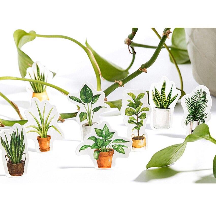 20 10packslot Adorável Verde Vida Oxigênio da