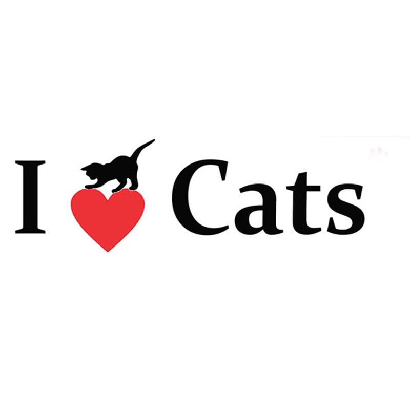 Eharmony cat hookup video i love