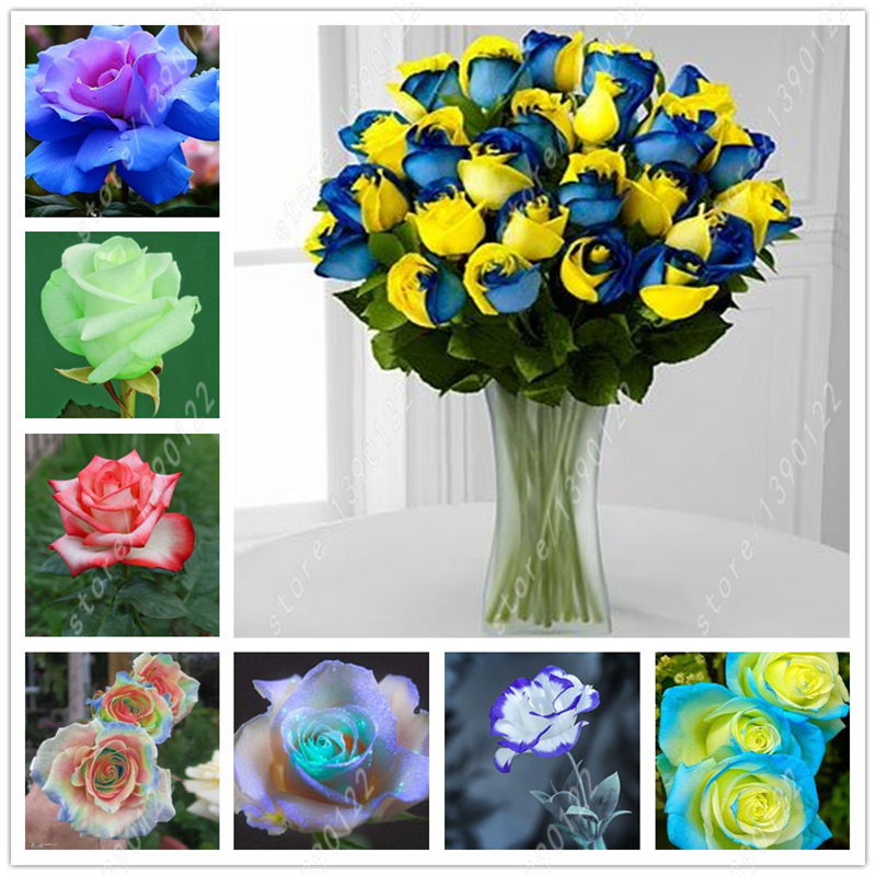 100 pcs/bag rose seeds,rose flower seeds,rare bonsai flower seeds,24 colours Natural growth pot plant for home garden