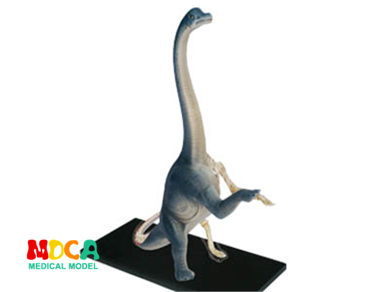 Brachiosaurus 4d master puzzle Assembling toy Animal Biology Dinosaur organ anatomical model medical teaching model 4d master cat puzzle assembling toy animal biology organ anatomical model medical teaching skull skeleton model science toys