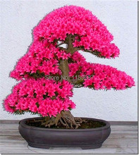 Mix of 9 popular Bonsai Tree Flower Seeds