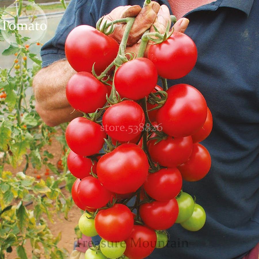 Fullsize Of Sweet 100 Tomato