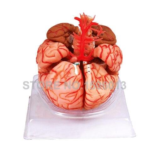 9 – ნაწილიანი ტვინის - სასკოლო და სასწავლო მასალები - ფოტო 2