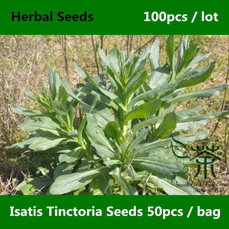 ^^Chinese Medicine Herb Isatis Tinctoria ^^^^ 100pcs, Asp Of Jerusalem Woad ^^^^, Strong Adaptability Dyers Woad Glastum ^^^^