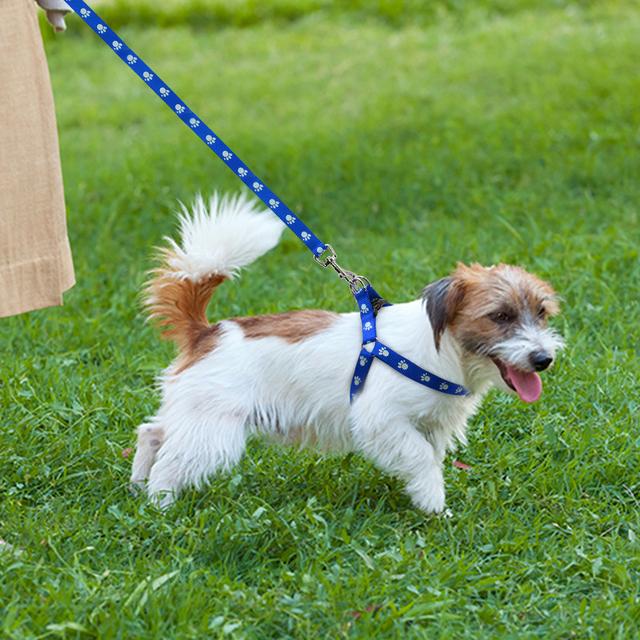 Arnés para Perros con Estampado de Pata y Correa