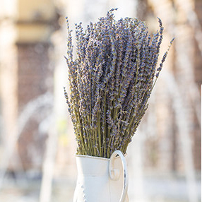 New Wholesale Natural Dried Flower UK dried Lavender flowers for home decoration artificiales Real Flower