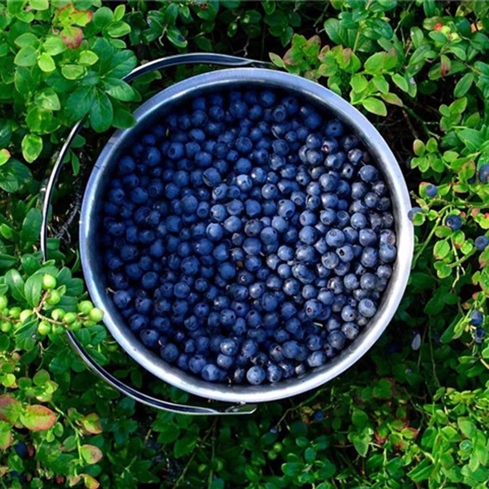 50 Pcs/set Artificial Blueberry Crafts Simulation Foam Fake Fruit Blueberries Photography Prop Home Kitchen Cabinet Decoration