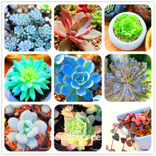 Loss Promotion 10pcs 99 Kinds to choose Lithops Seeds Succulents Seeds Pseudotruncatella Office Bonsai Flower Seeds