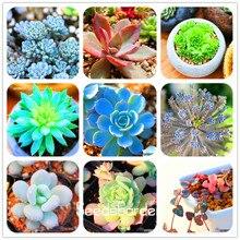 Loss Promotion!10pcs 99 Kinds to choose Lithops Seeds Succulents Seeds Pseudotruncatella Office Bonsai Flower Seeds,#FDXK1W