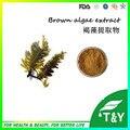 Китай лучший завод прямые поставки высокое качество экстракт бурых/Фукоксантин порошок 800 г/лот