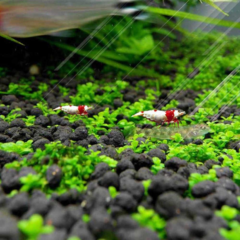 水族館植物種子 Glossostigma Hemianthus Callitrichoides 簡単成長水植物草水槽風景装飾