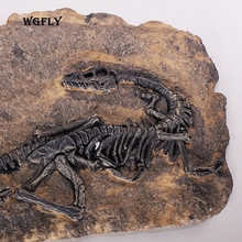 Just a wall decoration? A story from 100 million years ago, dinosaur fossil is hung on the wall of a room, then...