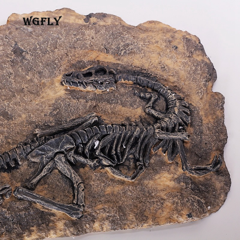 Just a wall decoration? A story from 100 million years ago, dinosaur fossil is hung on the wall of a room, then